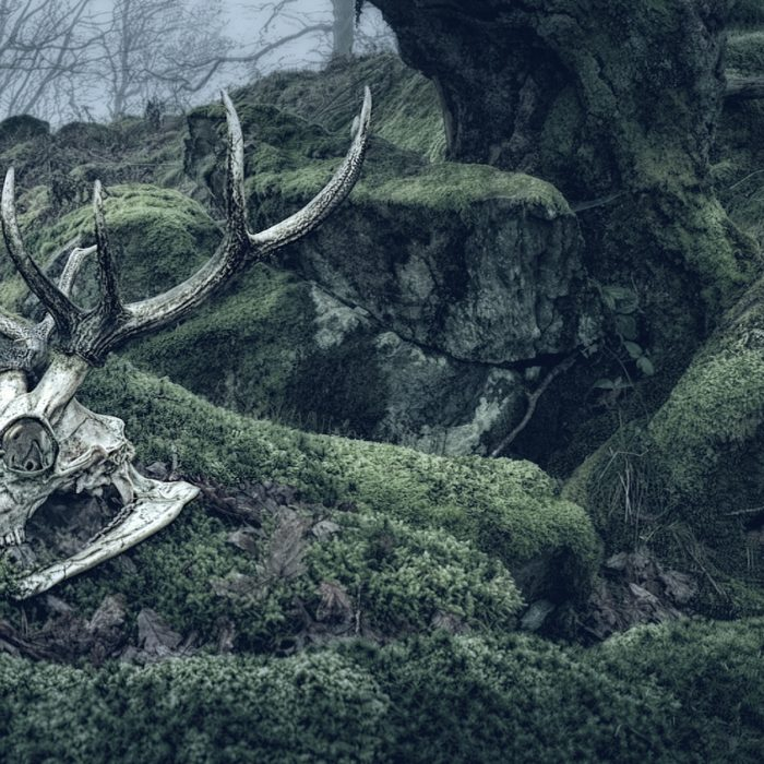 Stags skull in landscape